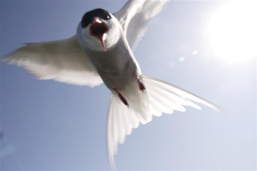 Close to the birds on the Farne Islands