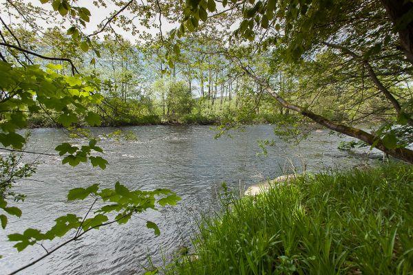 Riverbank at Greystead
