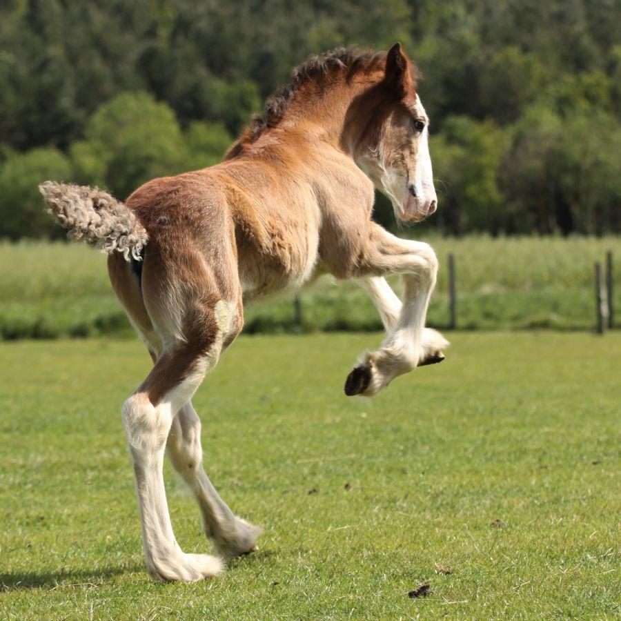 Foal © Viv Potts