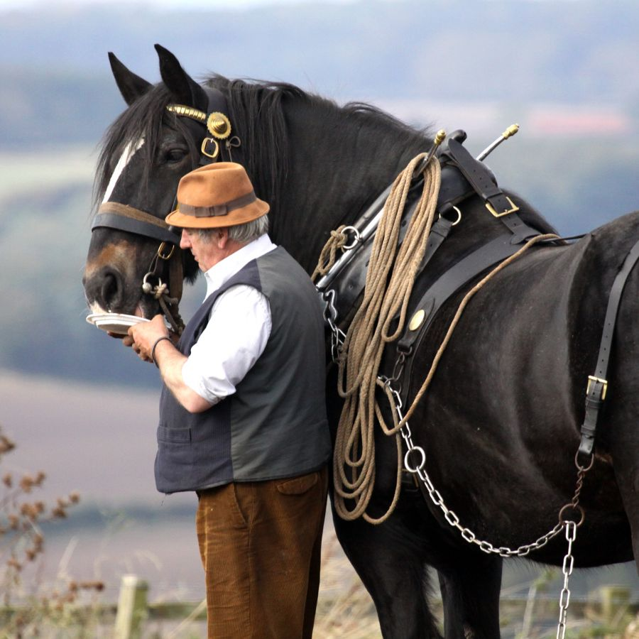 Man and Horse © Viv Potts