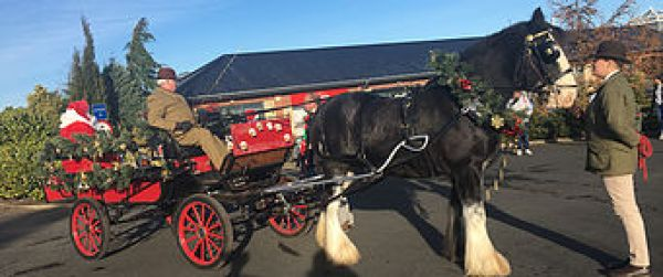 Hay Farm Heavy Horse Centres Christmas Fayre