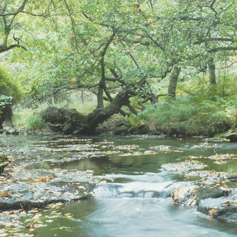Holystone Wood