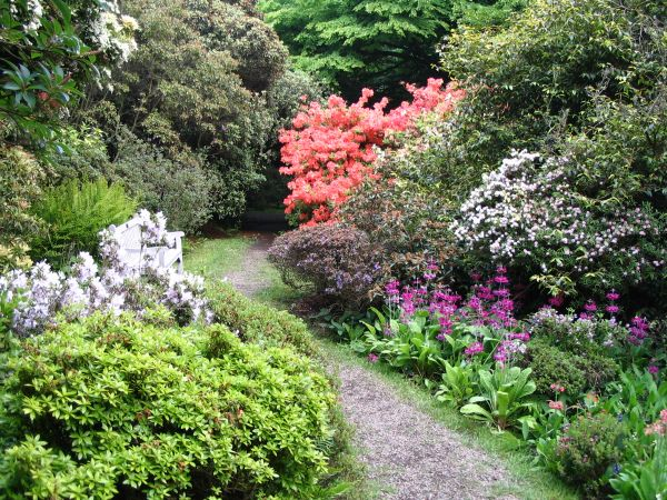 Glorious Silverwood - the Woodland Garden