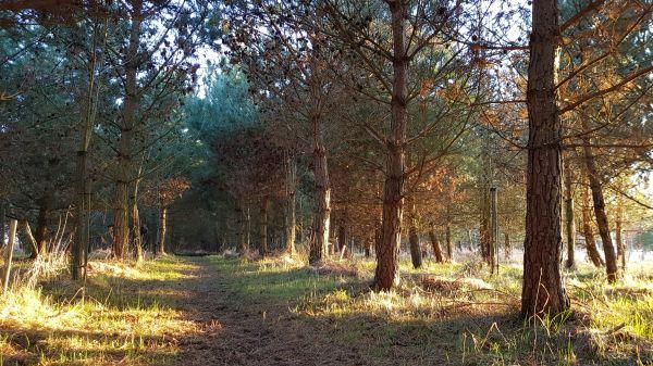 Meg's Wood at Hunting Hall