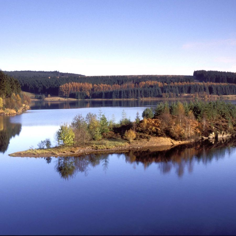 Kielder Woodland Forest Park
