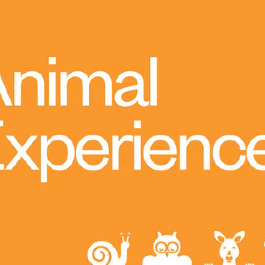 Animal Experinces