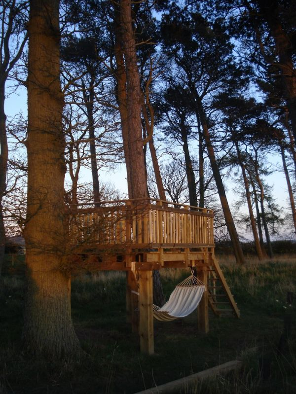 Tree Platform for Stargazing