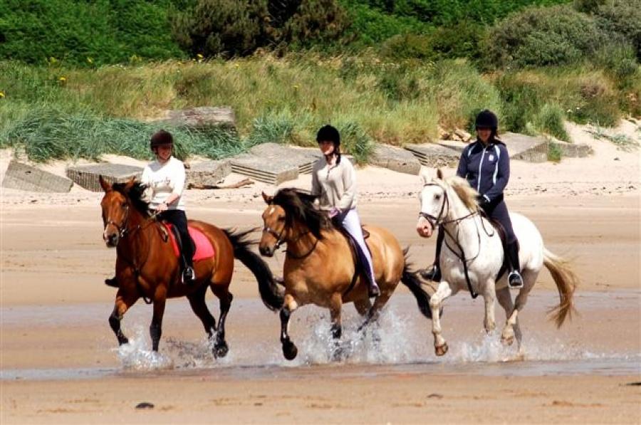 Horse riding along the coast
