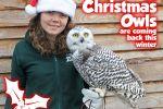 Northumberland County Zoo - Christmas Owl events