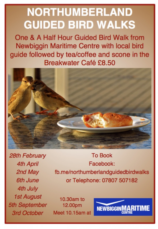 Northumberland Guided Bird Walks.