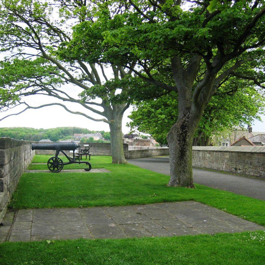 Elizabethan Walls 100 YDS