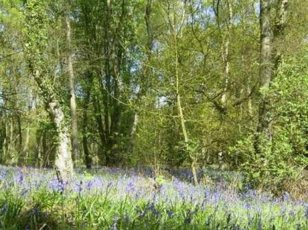 Plessey Woods Country Park