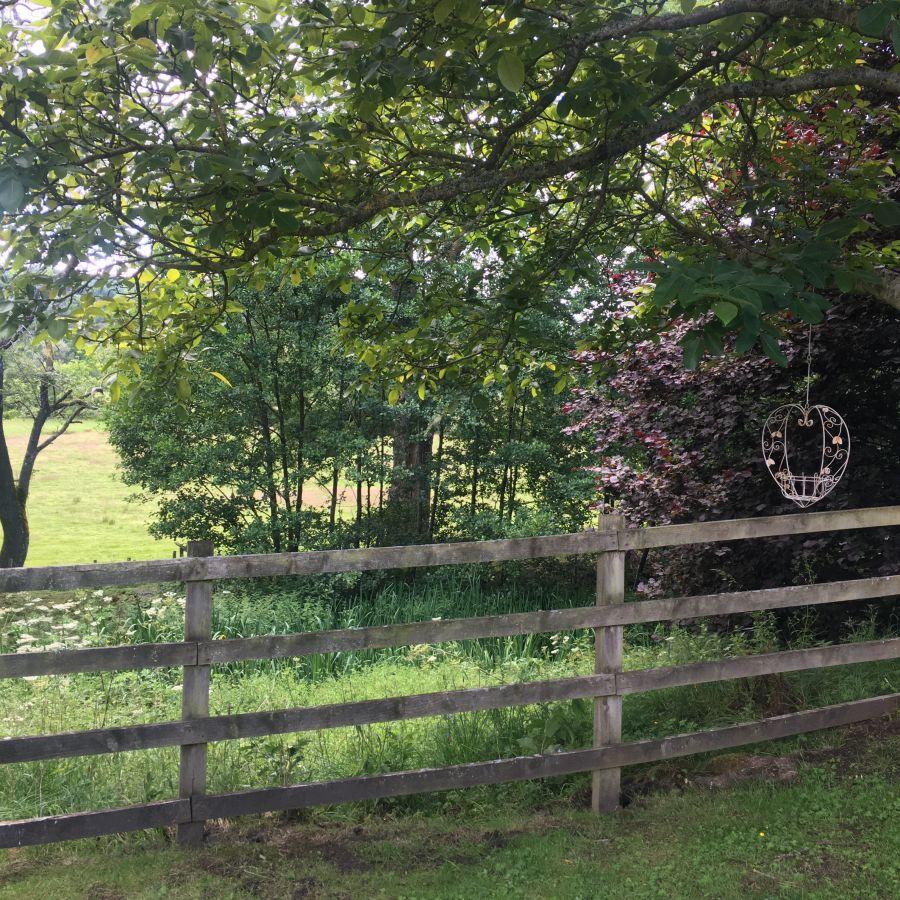 Walnut Tree in Meadow View garden