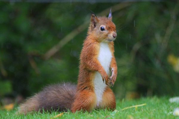Red Squirrel Week