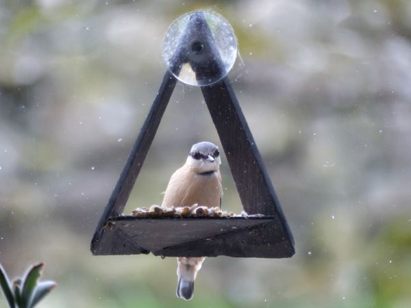Slate and Nature's Christmas Open Days