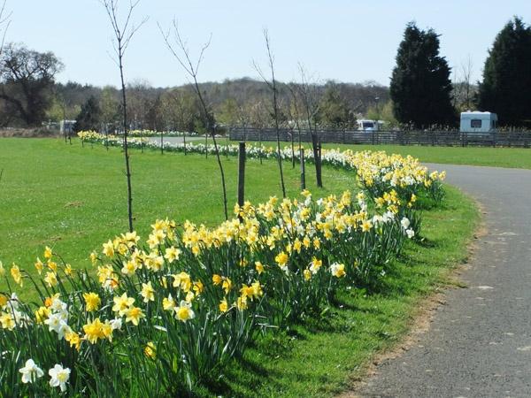Springtime Driveway
