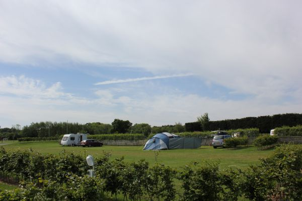 The Willows Grass Pitches