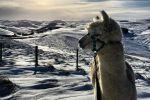 Sunset Stroll with an Alpaca