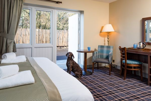 Dog  friendly rooms