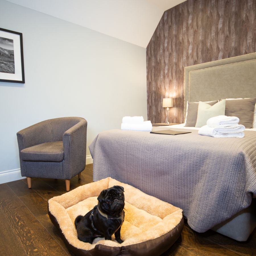 One of our dog-friendly rooms