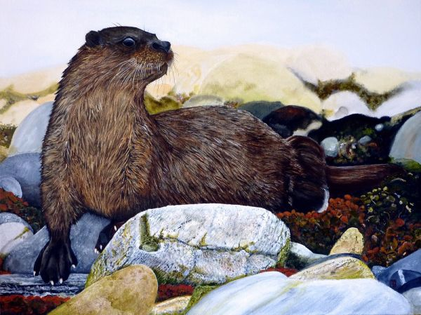 Tom Dudding, Otter