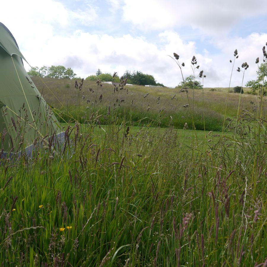 Meadow at Walkmill