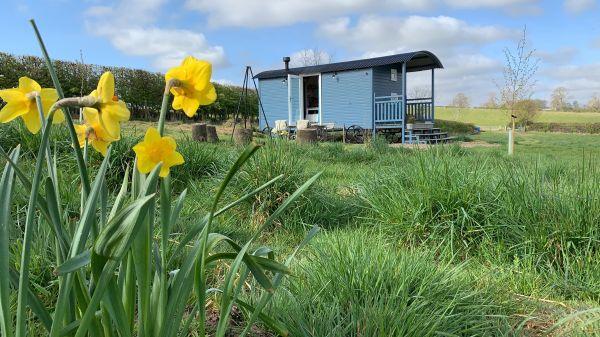 Demoiselle in Spring is near Rothbury Tourist Information Point