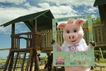Whitehouse Farm 21st Birthday - Fest