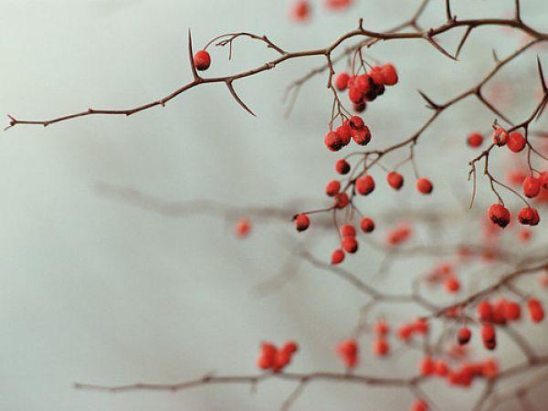 Winter Writing Retreat