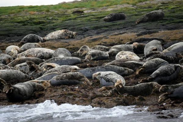 The Farne Island Seals