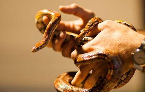 Zoolab Animal encounters