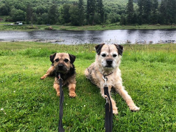 Terriers on Tour at Cragside