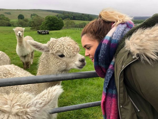 Head to Ferny Rigg - the Alpacas are in town!