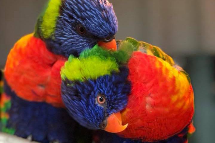 Kirkley Hall Zoological Gardens