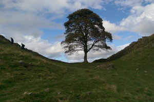 7f6aef40f5e Discover the iconic tree at Sycamore Gap