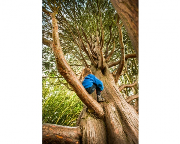 The UK's Best Tree for Climbing!