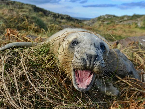 First Seal Pup Marks Start Of New Season