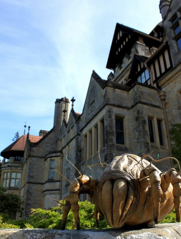 Giant bugs spotted lurking around Cragside