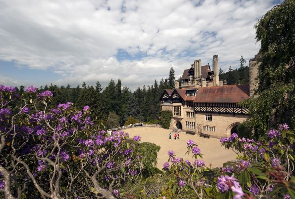 It's Rhododendron time at Cragside