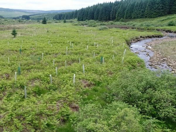 New Year, new 'Wildwood' project for Kielder