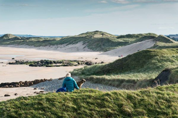 DOGS ARE WELCOME on Northumberland Beaches!