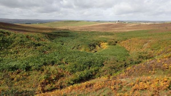 Paradise saved: Wildlife lovers chip in to protect Northumberland upland