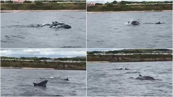 Incredible footage shows dolphins splashing around off the Northumberland coast