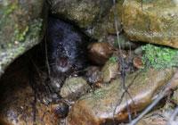 Restoring Ratty